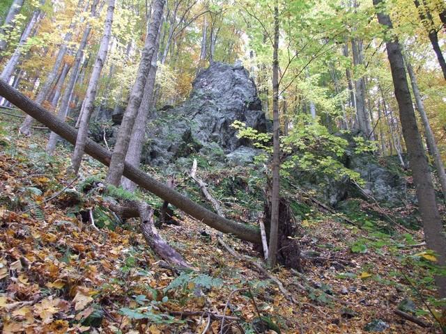 Rysí biotop v Jeseníkách. Foto: Martin Míček