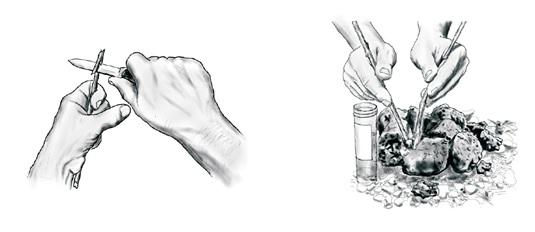 Odběr vzorku DNA