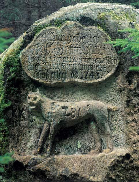 Ulovení jednoho z posledních rysů v Českém Švýcarsku dne 3. dubna 1743 připomíná pamětní kámen ve Velkém Kozím dole. (Foto V. Sojka)