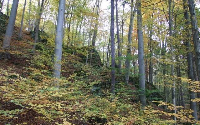 Krajina Jeseníků. Foto: Martin Míček